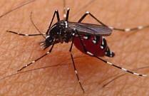 obat nyamuk tradisional