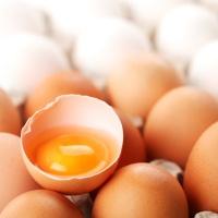 telur, sumber antioksidan